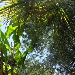 Rillette de Canard - Buisson